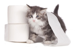 Kätzchen mit Toilettenrolle - cat toilet paper